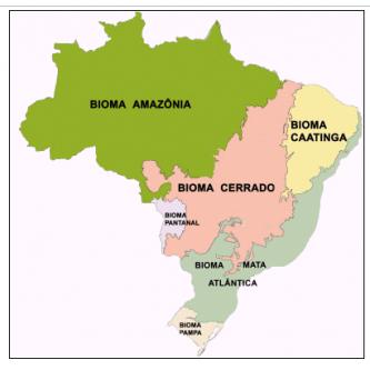 Café en grain du Brésil